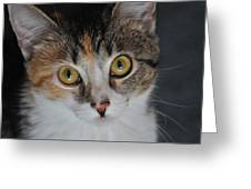 Nosey Lil Kitty Greeting Card