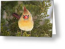 Not-so-angry Bird Greeting Card