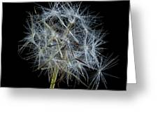 Not So Perfect Dandelion Greeting Card