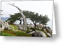 Not The Ghost Tree Greeting Card