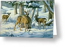 Not This Year - Mule Deer Greeting Card
