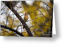 November Cardinal Greeting Card