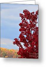 November Red Greeting Card