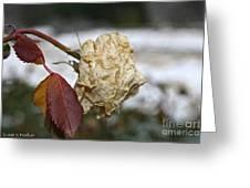 November Snow Rose Greeting Card