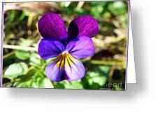 November Viola Greeting Card