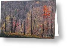 November Woods Greeting Card
