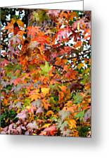 November's Maples Greeting Card