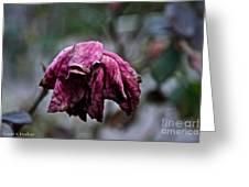 November's Red Rose Greeting Card