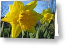 Now That's A Daffodil Greeting Card
