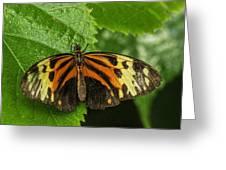 Numata Longwing Butterfly Greeting Card