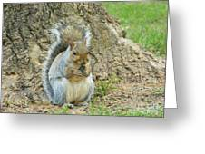Nut Break For Chubber Greeting Card