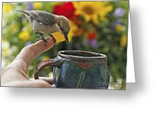 Nuthatch Bird On Finger Photo Greeting Card