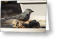 Titmouse Drinking Greeting Card