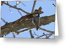 Nuthatch Getting To The Good Stuff Greeting Card