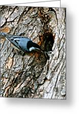 Nuthatch Love Greeting Card