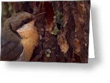Nuthatch Up Close Greeting Card