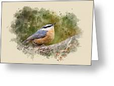Nuthatch Watercolor Art Greeting Card