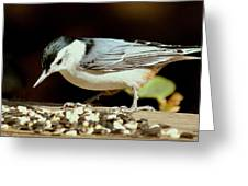 Nuts For The Nuthatch Greeting Card