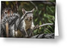 Nuts Please Greeting Card