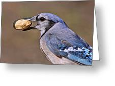 Nutty Bluejay Greeting Card