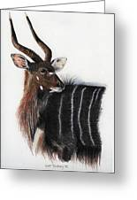Nyala Bull Greeting Card