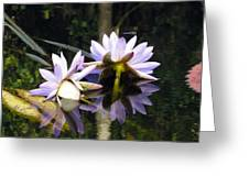 Nymphaea Colorata. Water Lilies Greeting Card