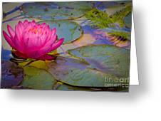 Nymphaeaceae Greeting Card