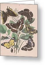 Nymphalidae - Danaidae Greeting Card
