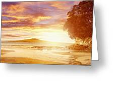 Nz Sunlight Greeting Card by Les Cunliffe