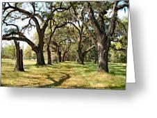 Oak Allee At Roseland Plantation  Greeting Card