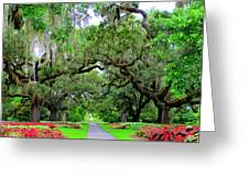 Oak Allee Brookgreen  Greeting Card