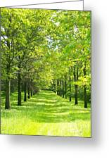 Oak Allee Greeting Card