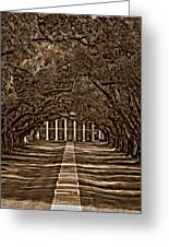 Oak Alley Bw Greeting Card
