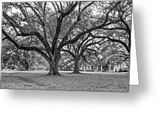 Oak Alley Grounds Bw Greeting Card