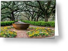 Oak Alley Landscape In Vacherie Louisiana Greeting Card