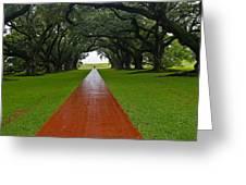 Oak Alley Path Greeting Card