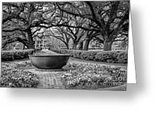 Oak Alley Plantation Landscape In Bw Greeting Card