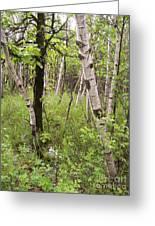 Oak And Birch Greeting Card