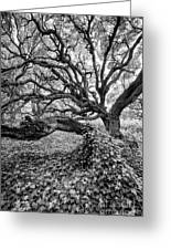 Oak And Ivy Bw Greeting Card