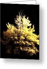 Oak At Night Greeting Card