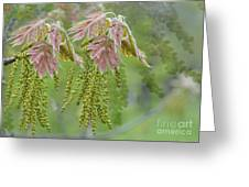 Oak Blossoms Greeting Card