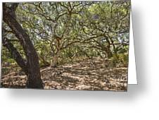 Oak Forest - The Magical And Mysterious Trees Of The Los Osos Oak Reserve Greeting Card