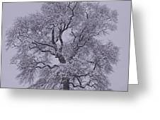 Oak In Snow Greeting Card by Don Perino