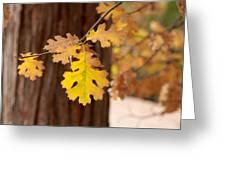 Oak Leaf Greeting Card by Denice Breaux