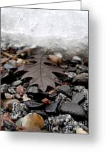 Oak Leaf On A Winter's Day Greeting Card by Steven Valkenberg