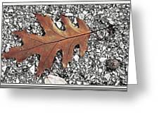 Oak Leaf On Asphalt  Greeting Card