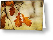 Oak Leaves At Autumn Greeting Card