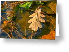 Oak Leaves In A Puddle Greeting Card