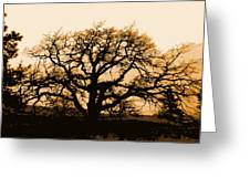 Oak Lit Greeting Card