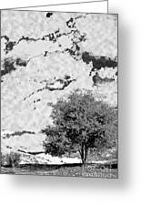 Oak On A Hill Blk And Wht Greeting Card